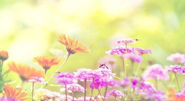 fiorentino-de-mae-pra-filha-primavera-640x350.jpg